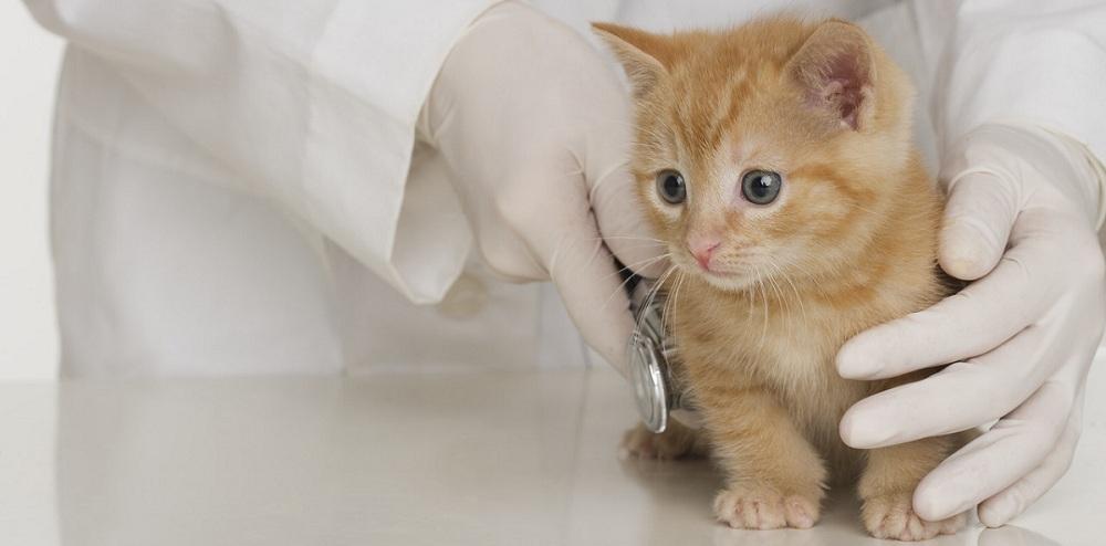 Ветеринарная хирургия