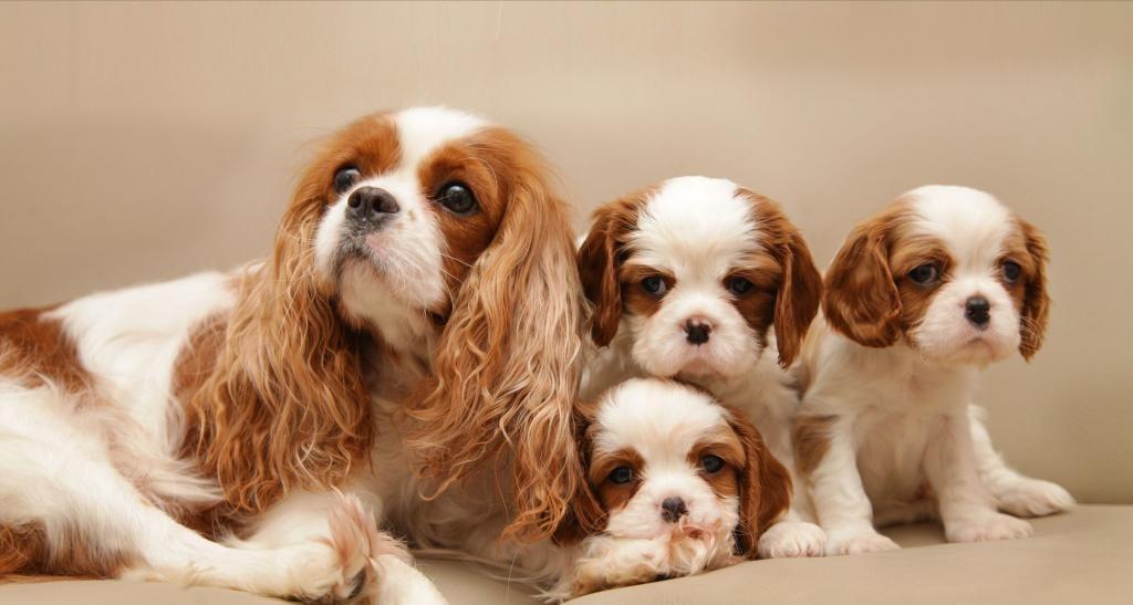 Кесарево сечение у кошек и собак