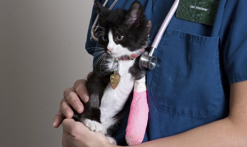 Остеосинтез. Лечение переломов у животных